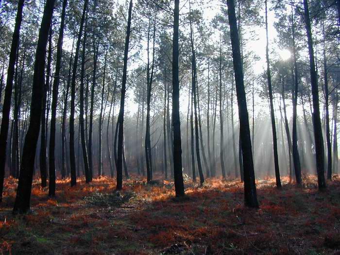 La forêt Landaise : Le balisage